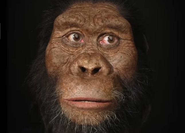 лицо предка человека