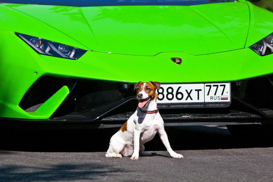 фото Lamborghini Huracan Performante и собаки