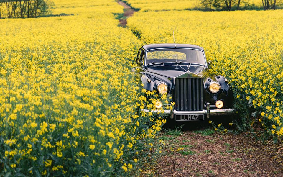 роллс-ройс в поле