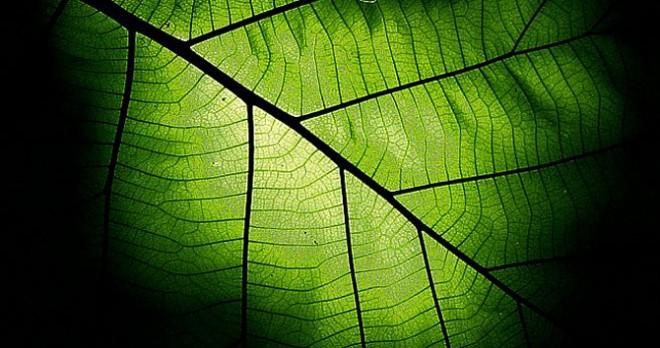 ключ к фотосинтезу