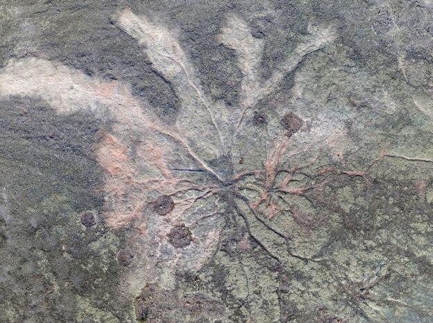древнейших деревьев фото