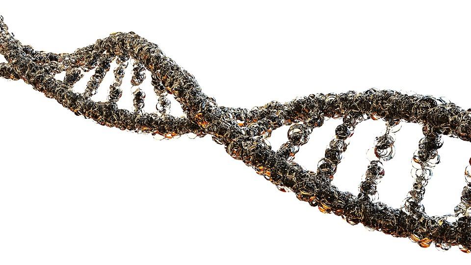 ДНК живших