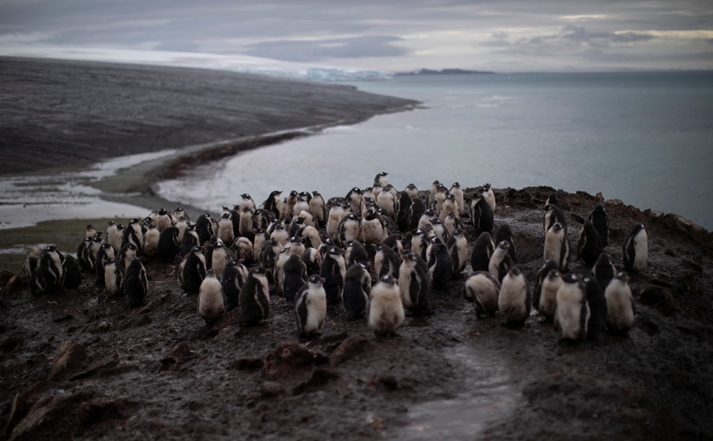 Антарктике рекордно высокую температуру
