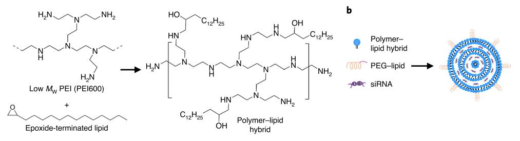 Схема получения липид-полимерных наночастиц с siRNA