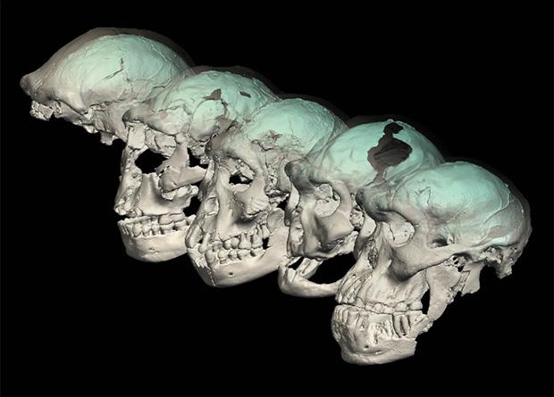 Устройство мозга древнейших людей