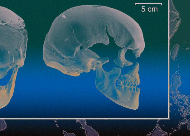 старейший геном современного человека