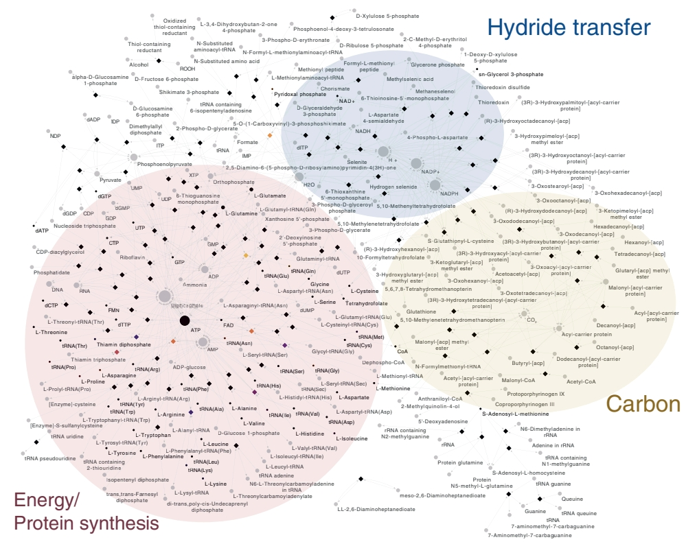 Предположительная метаболическая карта предковой бактерии.