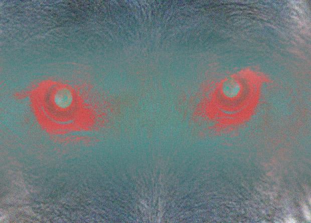Склонность собак к агрессии